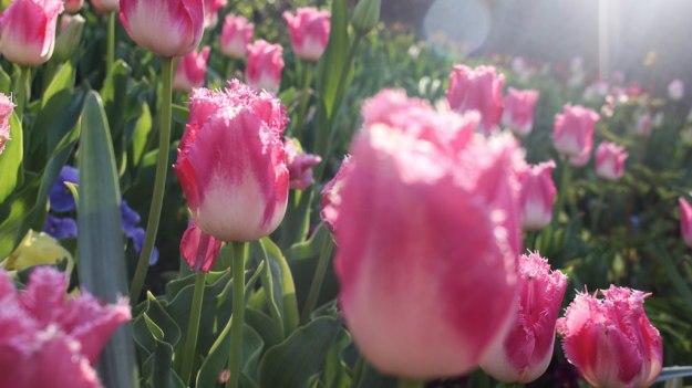 brittanyriboldi-flowers